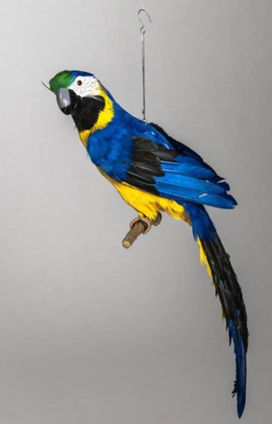 Blue Macaw 65cm