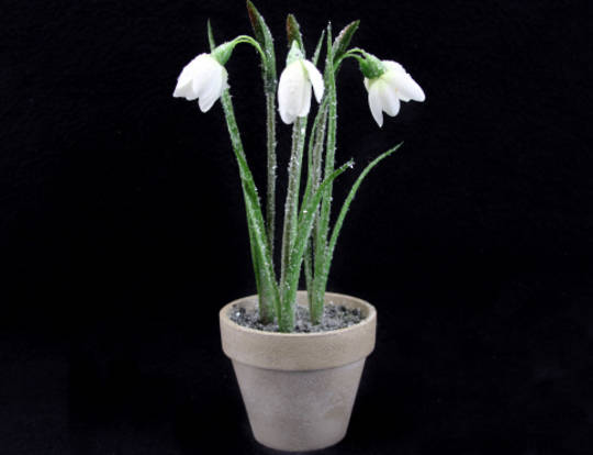 Standing Potted Snowdrop