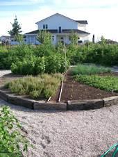 Daltons Garden Mix