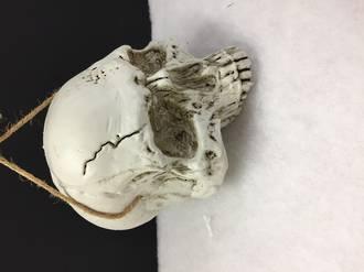 Hanging Half skull
