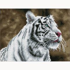 Tiger Blanc DDSQ8.007