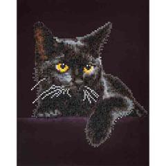Midnight Cat DD5.001