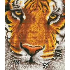 Bengal Magic DD8.001