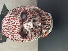 Bloody mask - XH7100