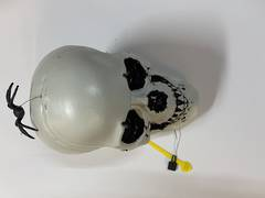 Skull with Rotating Spider XH5412