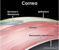 cornea.jpg