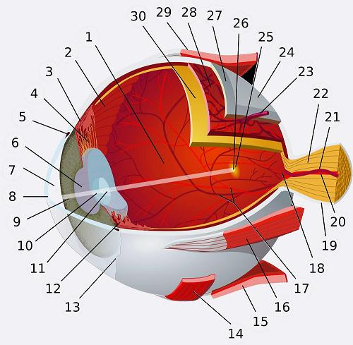 eye_diagram_glossary.jpg