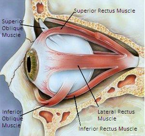 eye_muscles_strain.jpg