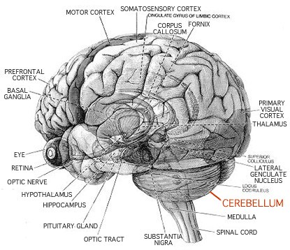 brain_sight.jpg