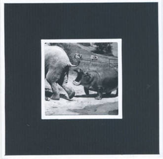 Blank Card Photographic Hippo and Elephant