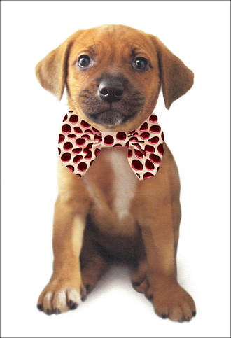 Woof & Purr Pup Bow Tie