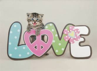 Love Card Persimmon Press Kitten