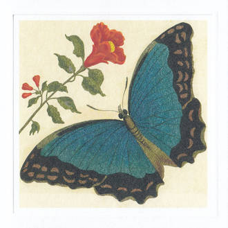 Correspondence Azure Butterfly