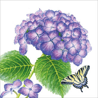 Lunch Napkins Paper Products Hydrangea Butterfly