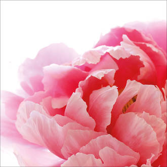 Lunch Napkins Paper Products Peony