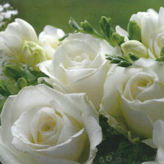 Lunch Napkins Paper Products White Roses