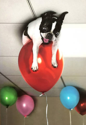 Jumbo Card Leaving Dog on Balloon