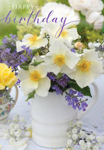 Posies & Petals White Dog Rose