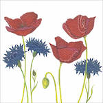 Almanac Gallery Wildlife Cornflower & Poppies