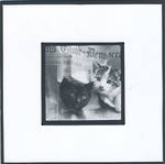 Blank Card Photographic Kittens & Newspapers