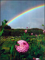 Mini Card La Prairie Garden Rainbow