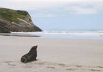 Pure NZ Kiwiana Fur Seal