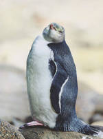 Pure NZ Kiwiana Penguin