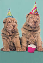 Hallmark Shoebox Birthday Pug Puppies