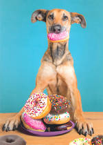 Portal Dog and Donuts