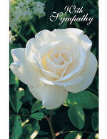 Sympathy Card Special Occasions Rose