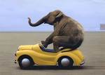 Persimmon Press Elephant Driving