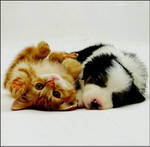 Blank Card Photographic W11 Small Kitten and Puppy