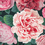 Lunch Napkins Paper Products Pretty Peonies