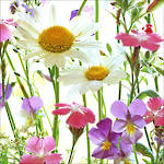 Lunch Napkins Paper Products Flower Field