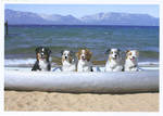 Palmpress Dogs In Canoe