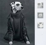 Blank Card Photographic Nero Dog in Leather Jacket