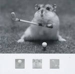 Blank Card Photographic Nero Hamster Playing Golf