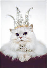 Avanti Birthday Cat Tiara