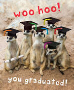 Graduation Card Meerkats