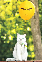 Avanti Cat with Balloon