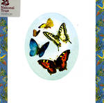 Blank Card General National Trust Square Butterflies