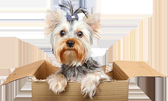 Shop Pet Products