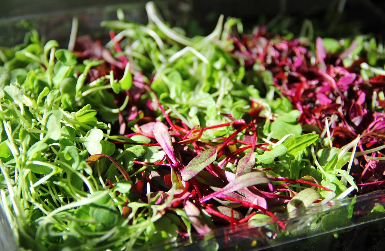 Grow Nutritious Microgreens