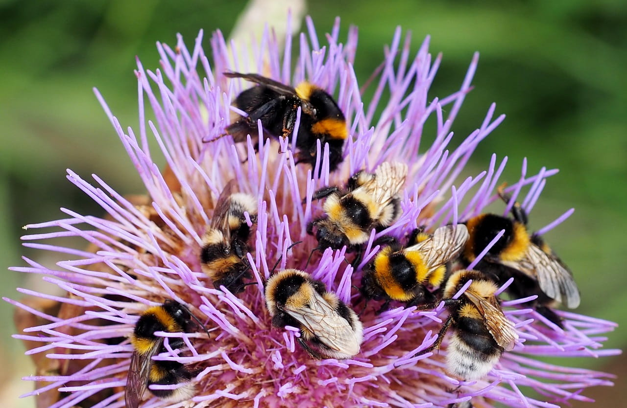 Bees! Plant these to attract them....