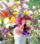 Cut_Flowers_4.jpg