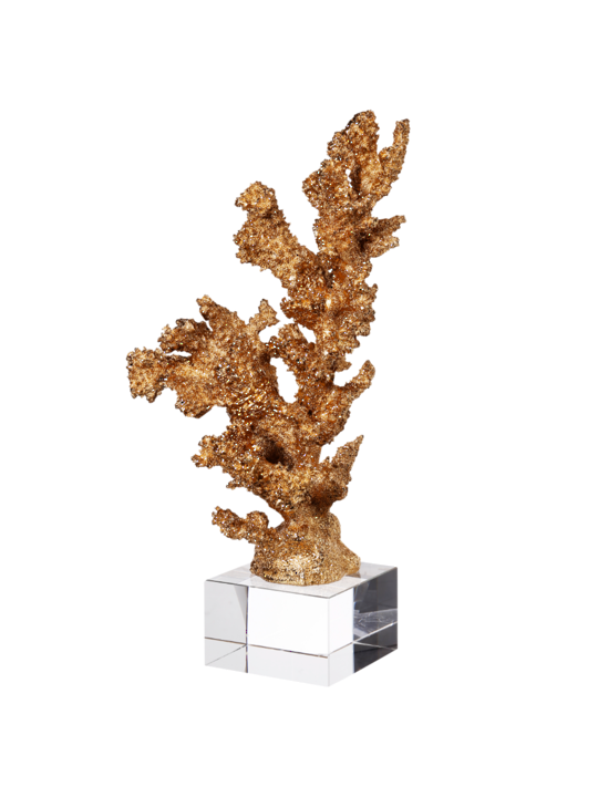 GOLDEN CORAL ON CLEAR BASE 2