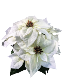 33CMH WHITE/GREEN POINSETTIA BUSH