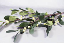 DOZEN CREAM GREEN MISTLETOE SPRAY