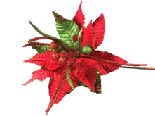 35CMD RED / GREEN SPIKY POINSETTIA
