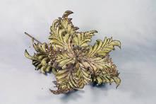 GOLD VELVET ACANTHUS FLOWER (12)